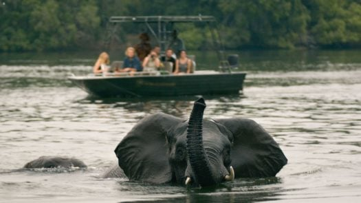 elephant-zambezi-river