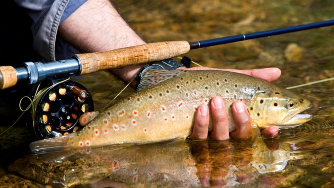 fly-fishing-trout