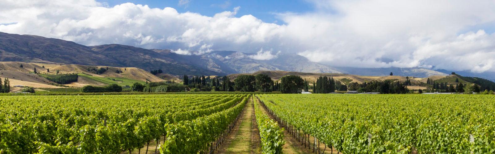 vineyard-cromwell-new-zealand