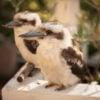 lake-house-daylesford-kookaburra