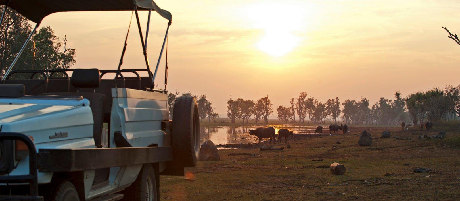 bamurru-plains-buffalo-sunset