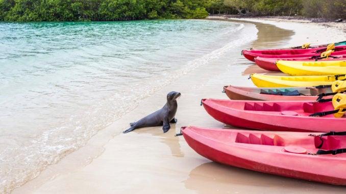 kayaking-galapagos
