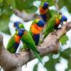 thala-beach-nature-reserve-birds
