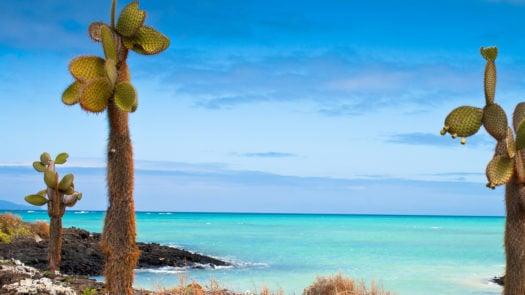 Santa Cruz Coast Beach Galapagos