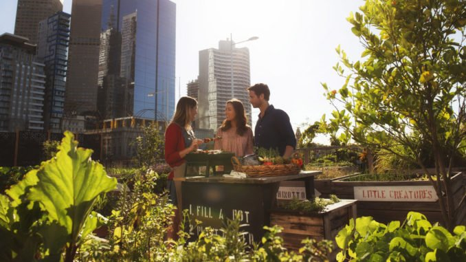 Federation Square Pop up Patch rooftop produce gardens, Melbourne, Victoria