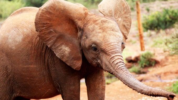 elephant-orphanage-baby