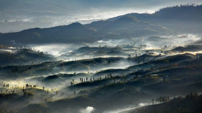tea-plantations-sri-lanka-misty