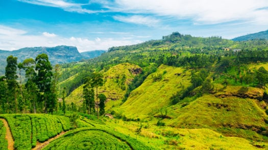 tea-plantation-landscape-sri-lanka