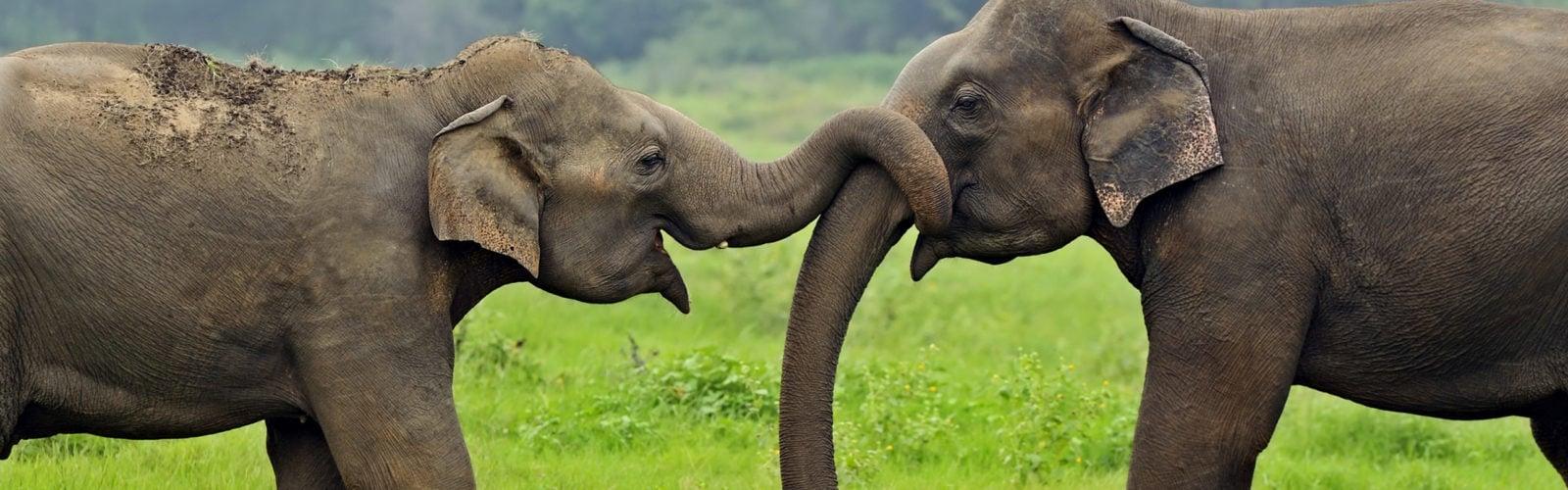 wild-elephant-sri-lanka