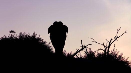 elephant-gal-oya-lodge-sri-lanka