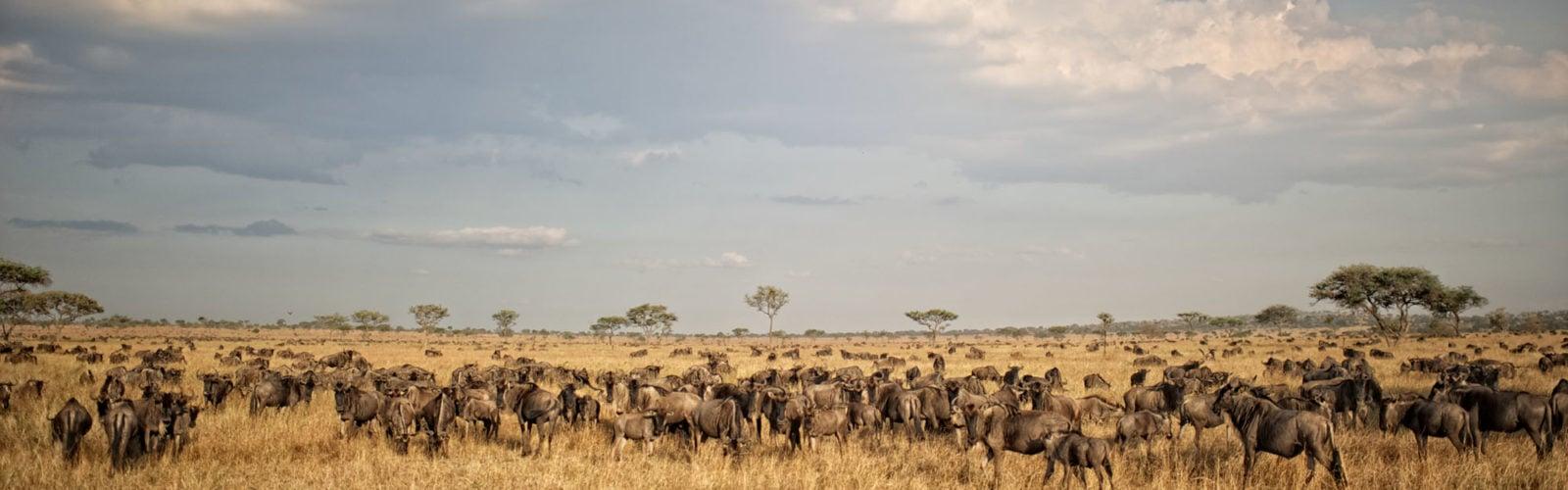tanzania-serengeti-migration