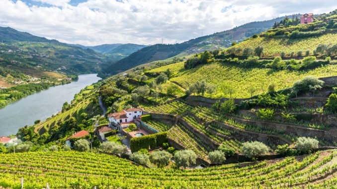 vineyards-landscape-douro-valley-portugal