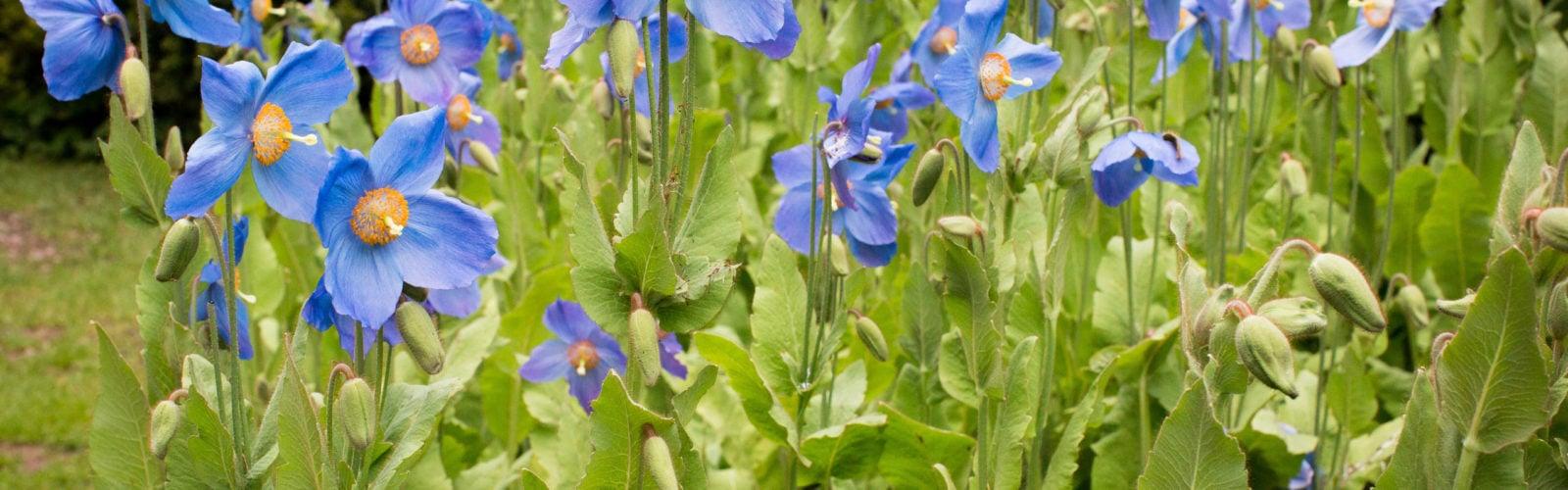 dalemain-flowers