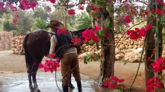 finca-kenia-horse-washing