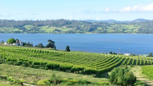 tamar-valley-vineyard