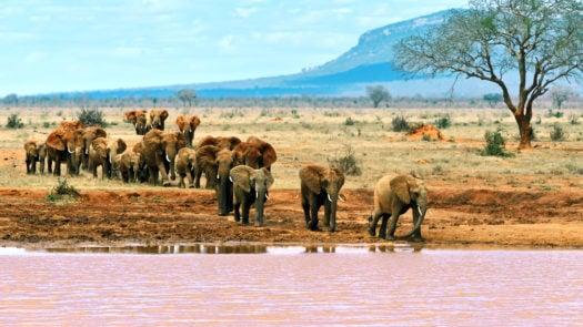 elephanst-tsavo-east-kenya-africa