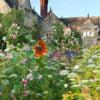gravetye-manor-wildflowers