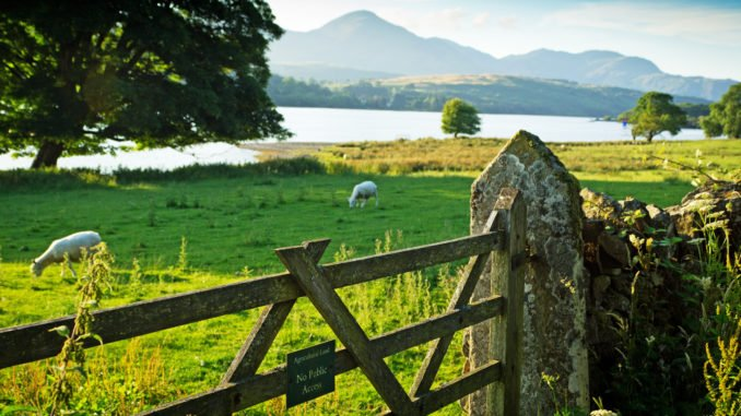 lake-district-coniston-fence-sheep
