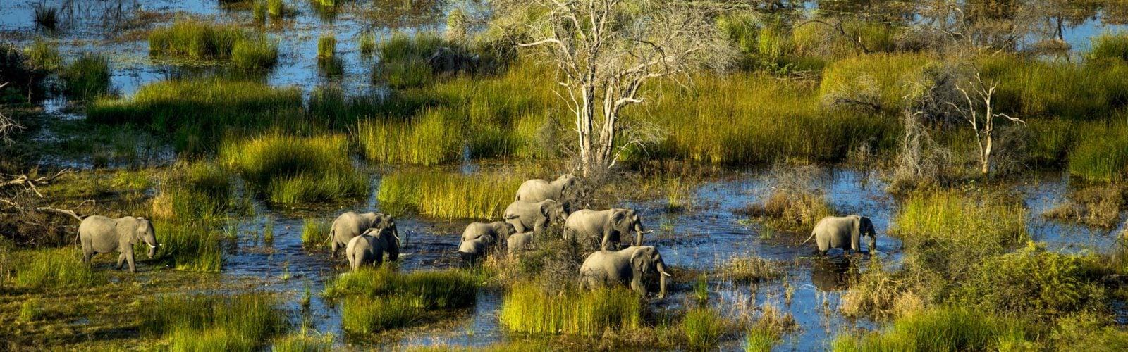 elephants-okavango-delta