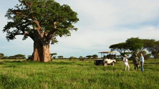 Singita Pamushana Lodge drive, Simbabwe, Malilangwe wildlife reserve