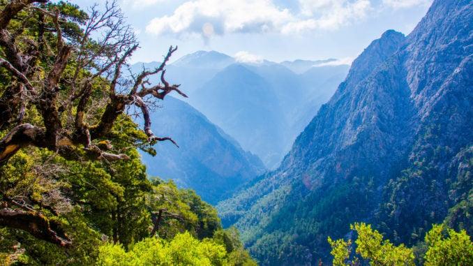 samaria-gorge-trees