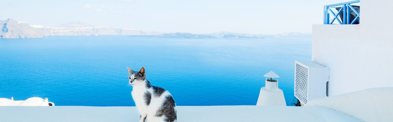 Cat against blue sky and sea in Santorini island, Oia, Greece