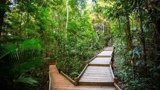 daintree-rainforest-boardwalk-australia