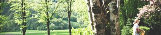 The woods at Hiša Franko, Slovenia