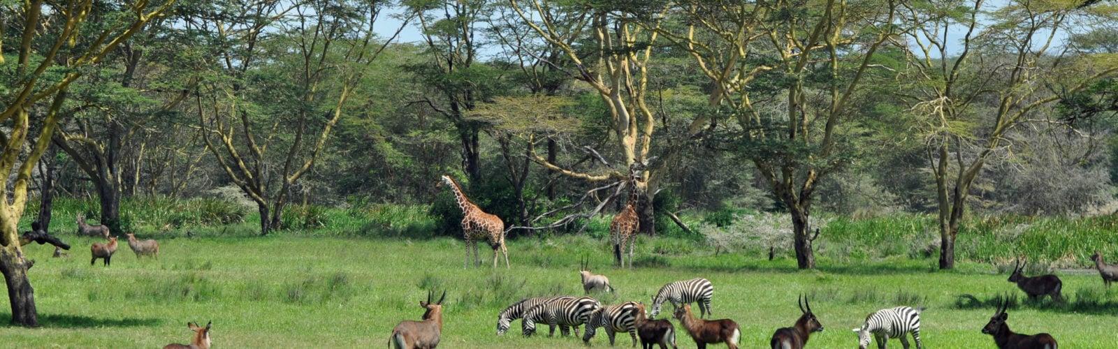 Solio Lodge, Solio Game Reserve, Kenya