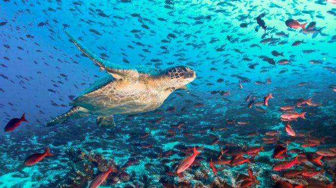 snorkelling-galapagos-islands-ecuador