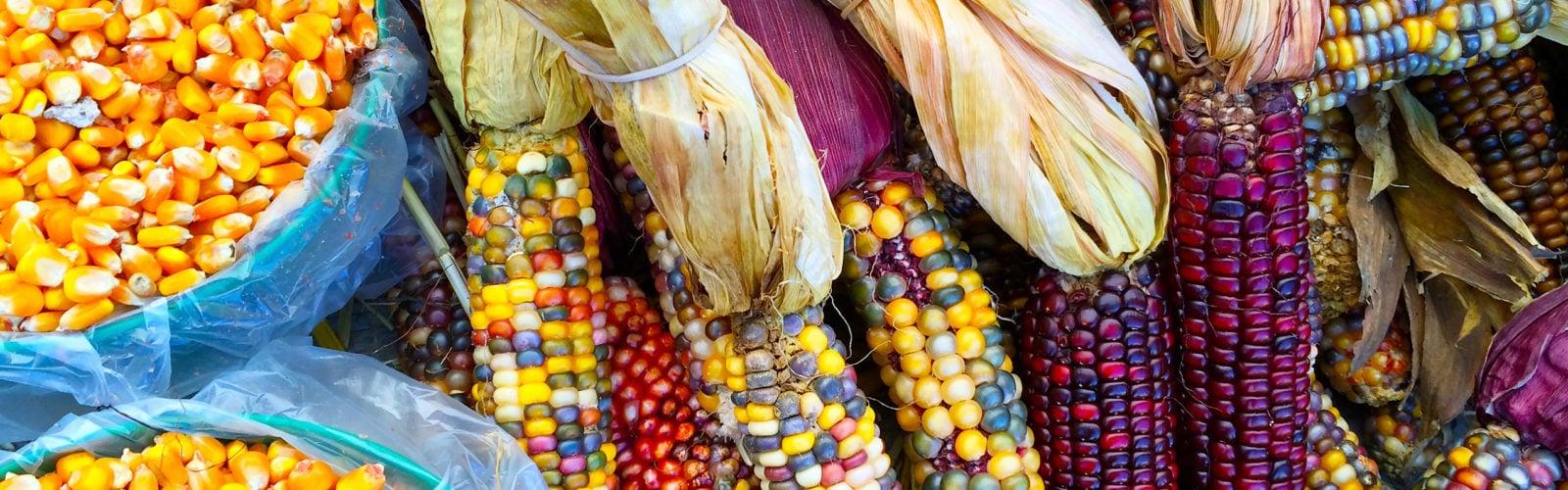 colourful-corn-peru
