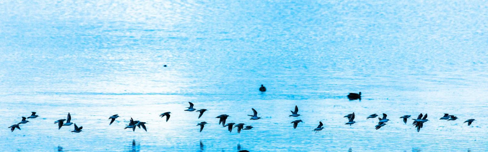 lake-titicaca-peru-birds