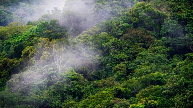 bwindi-forest-rwanda