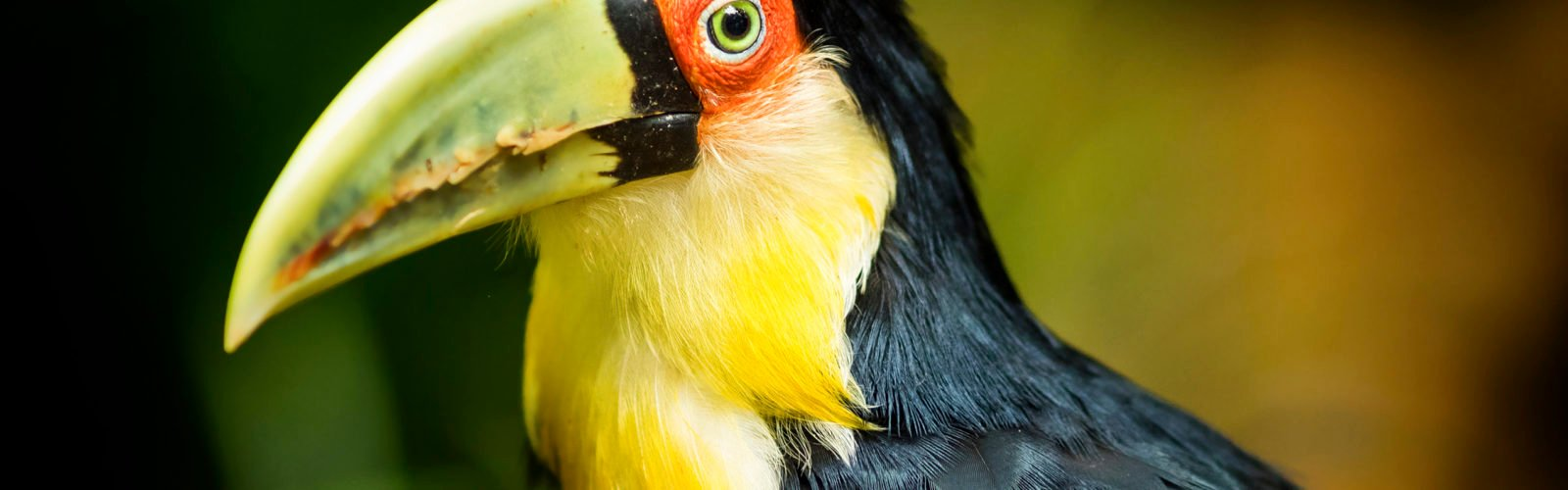 toucan-missiones-forest