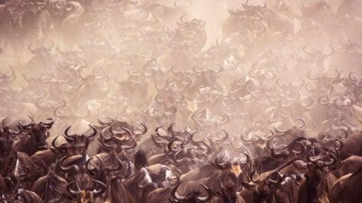 great-wildebeest-migration-kenya-maasai-mara
