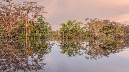 vegetation-amazon-ecuador