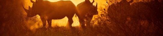 Rhinos-Malilangwe-Wildlife-Reserve-Zimbabwe