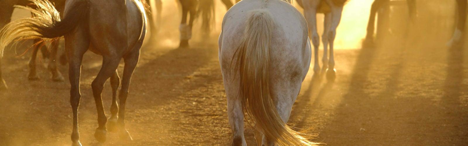lewa-wilderness-horses