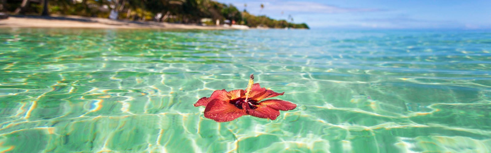 Hibiscus floating off tropical Fiji island