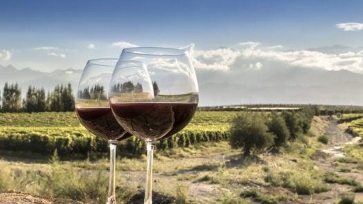 malbec-vineyard-mendoza-argentina