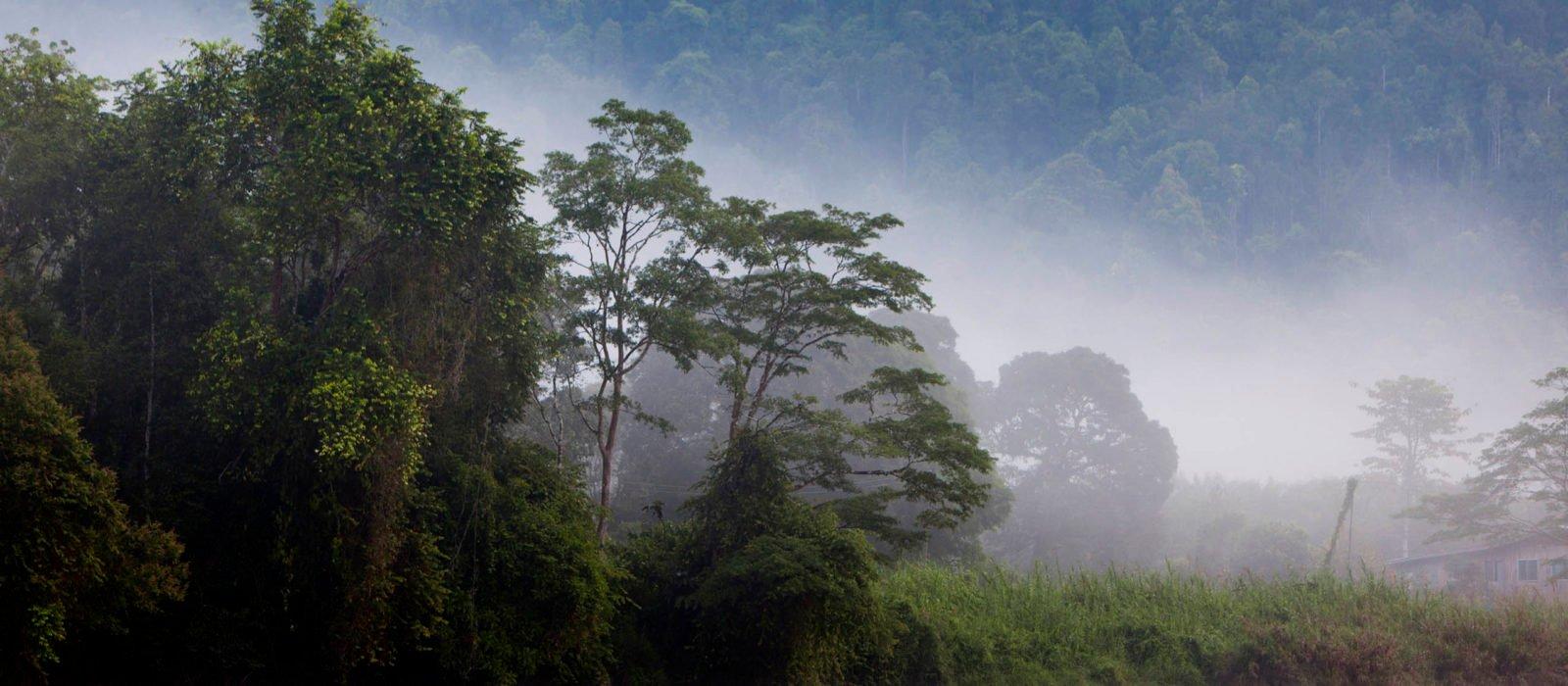 Kinabatangan River, Sabah. Borneo, Malaysia.