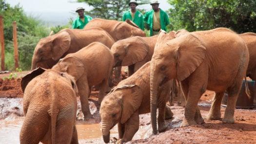 david-sheldrick-elephants-wildlife-trust-kenya