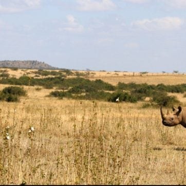 solio-rhino
