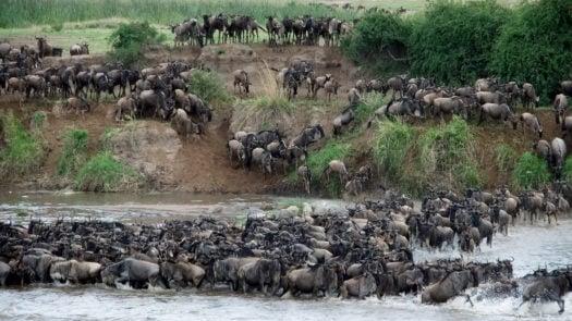 great-migration-mara-river-crossing-kenya