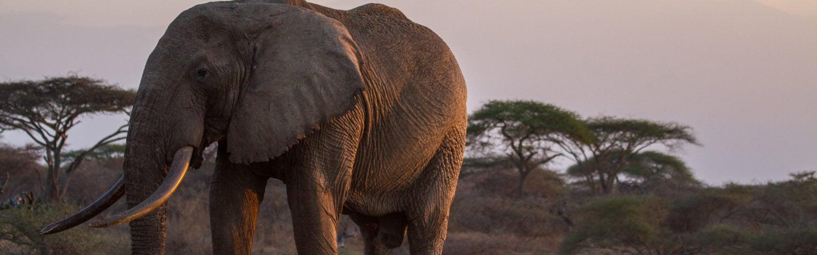 ol-donyo-lodge-elephant-dusk