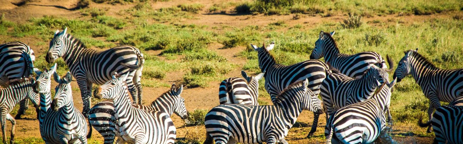 ol-donyo-lodge-zebras