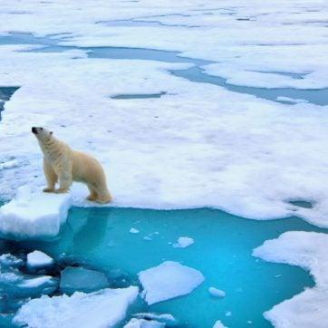 Polar bear on pack ice, Svalbard, Norway