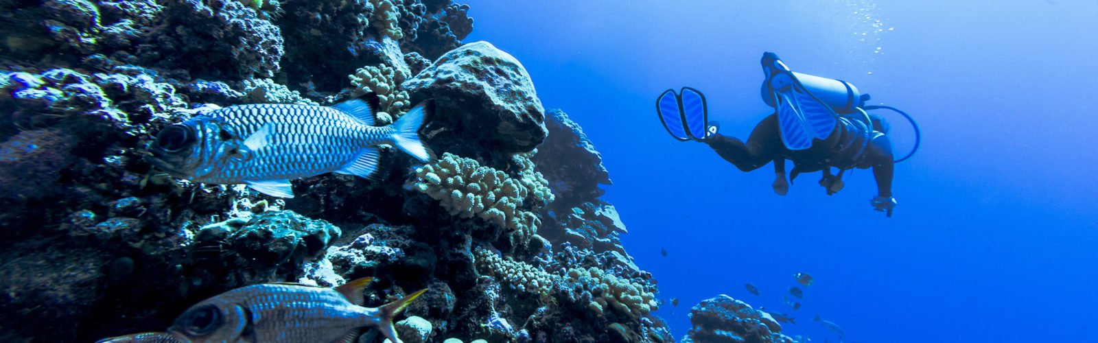 french-polynesia-diving
