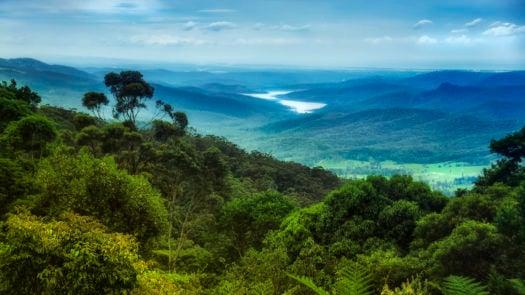 queensland-forest-australia