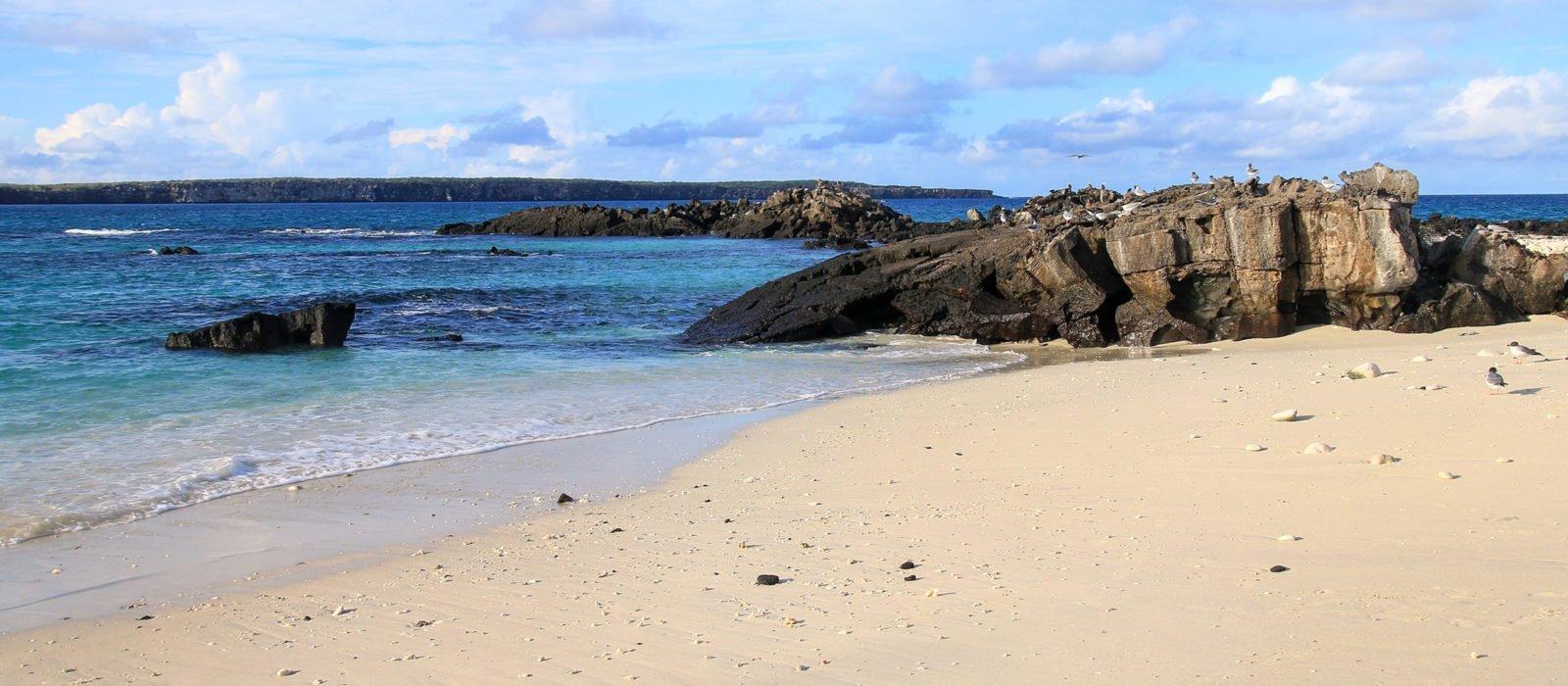 darwin-bay-genovesa-island
